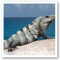 Health In The Bay Lizard